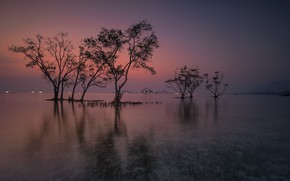 Picture water, trees, landscape, nature, beauty, the evening, space