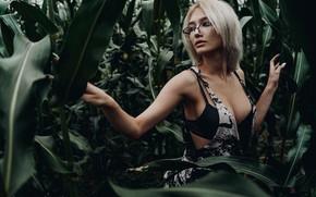 Picture field, chest, girl, pose, corn, glasses, blonde, Alexei Chelnokov