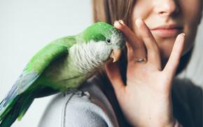 Picture love, green, bird, parrot, parrot, green parrot