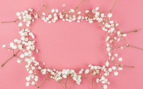 Picture flowers, white, white, pink background, pink, flowers, background, tender, frame, floral
