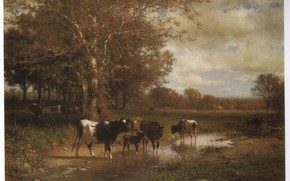Picture calf, HART, CATTLE BY A SREAM, cows drink
