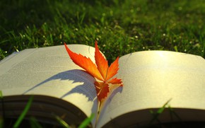 Picture autumn, grass, light, red, nature, glade, leaf, shadows, book, bokeh, autumn leaf, an open book