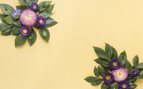Picture leaves, flowers, yellow, background, yellow, pink, flowers, background, purple