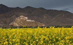 Picture field, flowers, mountains, Tibet, Palace