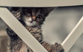 Picture hid, curiosity, tabby kitten