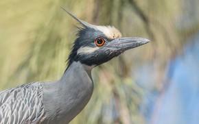 Picture look, portrait, the avian