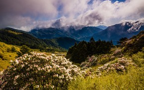 Picture forest, clouds, flowers, mountains, nature, fog, hills, the slopes, beauty, spring, morning, ate, Asia, haze, …