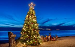 Picture beach, tree, deer, © candice Staver harris