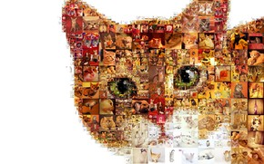 Picture cat, photos, photo collage, mosaic pattern