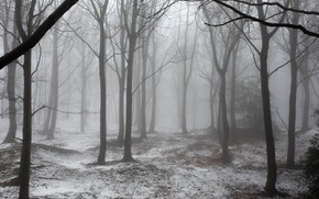 Picture winter, forest, snow, trees, nature, fog, UK