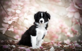Picture nature, dog, spring, puppy