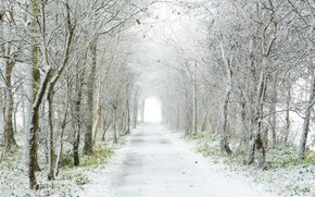 Picture road, snow, trees, fog