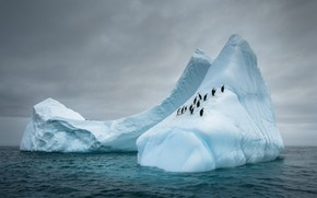 Picture winter, sea, the sky, snow, birds, clouds, overcast, the slopes, ice, penguins, glacier, iceberg, penguin, …