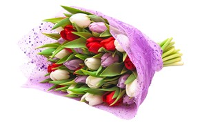 Picture bouquet, purple, tulips, red, white background, white