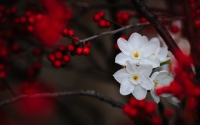 Picture branches, berries, daffodils