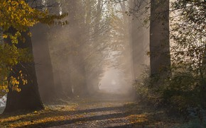 Picture autumn, leaves, rays, light, trees, branches, fog, Park, foliage, alley, path