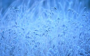 Picture frost, grass, freezing