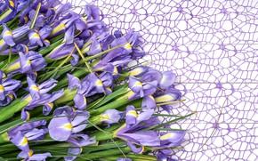 Picture flowers, bouquet, irises