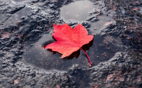 Picture red, sheet, puddle, red, leaf, puddle