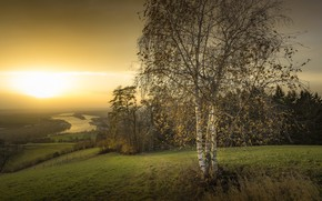 Picture sunset, nature, birch
