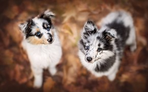 Picture dogs, look, puppies, bokeh, faces