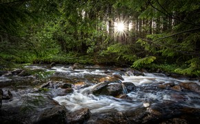 Picture forest, the sun, trees, river, mountain