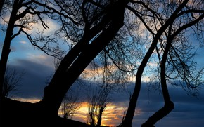 Picture sunset, clouds, sun, silhouette of tree