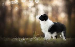 Picture dog, bubbles, puppy, bokeh