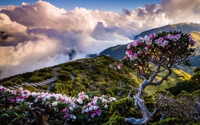 Picture clouds, landscape, flowers, mountains, nature, fog, hills, the descent, view, spring, ladder, Asia, Taiwan, stage, …
