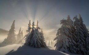 Picture winter, the sun, rays, trees, landscape, nature, ate, slope