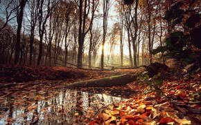 Picture autumn, forest, leaves, trees, Park, forest, nature, park, autumn, leaves, tree, sunrise
