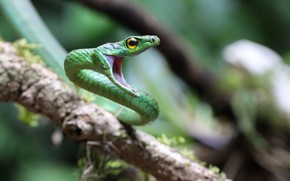 Picture background, snake, bokeh
