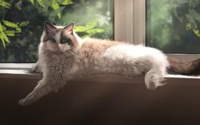 Picture cat, Window, Foliage