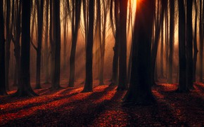 Picture autumn, forest, leaves, the sun, rays, light, trees, branches, fog, trunks, foliage, red, haze, twilight, …