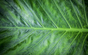 Picture macro, sheet, green, background, green, texture, macro, leaf
