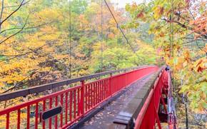 Picture autumn, leaves, trees, bridge, Park, colorful, landscape, bridge, park, autumn, leaves, tree, path, fall