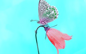 Picture BUTTERFLY, FLOWER, INSECT, BELL