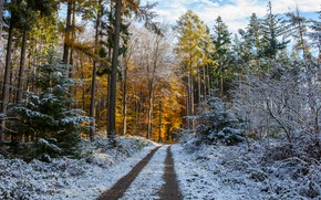Wallpaper winter, frost, road, autumn, forest, the sky, snow, trees, branches, nature, Park, trunks, yellow, ate, ...