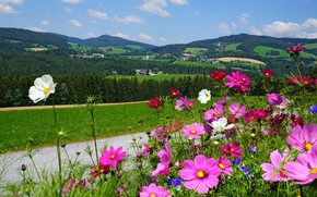 Picture road, greens, field, forest, summer, the sky, grass, clouds, flowers, mountains, nature, hills, glade, bright, …