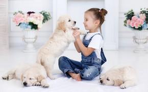Picture joy, room, puppies, girl, Retriever