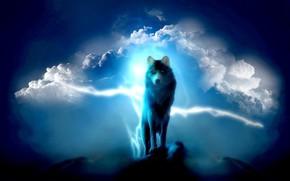 Picture clouds, wolf, glow, top, glow, wolf, fantasy art, peak, fantasy art, louds