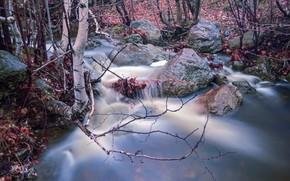 Picture autumn, branches, nature, stream, stones, birch, river, pond