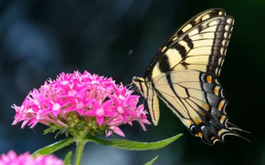 Picture flower, photo, butterfly, bokeh