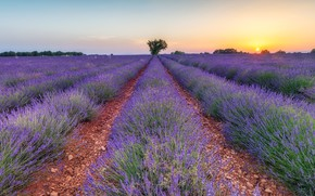 Picture field, summer, the sky, the sun, sunset, flowers, nature, tree, France, track, the evening, horizon, …