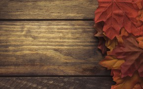 Picture autumn, leaves, background, Board, colorful, red, maple, wood, background, autumn, leaves, autumn, maple