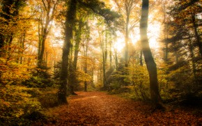 Picture autumn, forest, leaves, the sun, rays, light, trees, branches, Park, thickets, trunks, foliage, track, alley, …