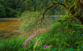 Picture greens, forest, grass, flowers, branches, pond, Park, tree, thickets, shore, swamp, moss, pink, pond