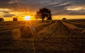 Picture tree, hay, summer, field, sunset