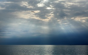 Picture sea, the sky, clouds, bird, Seagull, horizon