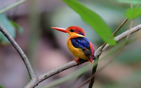 Picture bird, branch, Kingfisher